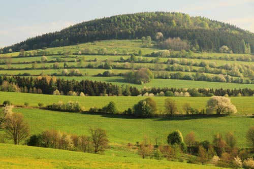 Hedgerow landscape in the Ore Mountains