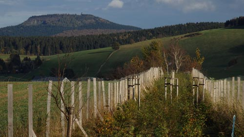 Hedgerow rejuvenation in the Ore Mountains
